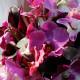 virginia-bouquet-feature