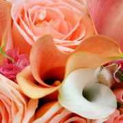orange-flowers-calla-feature