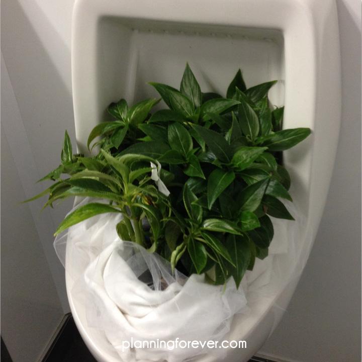 urinal-plant