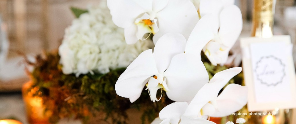 white phalaenopsis wedding